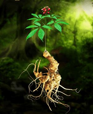 3 loại thảo dược quý trong hỗ trợ phòng và chữa bệnh